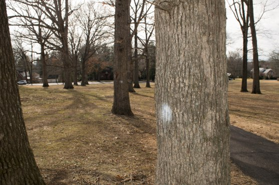 BLACKSBURG, Va., Feb. 15 - Trees are marked throughout the course to represent the different phases of construction. Photo: Alexis Walsh